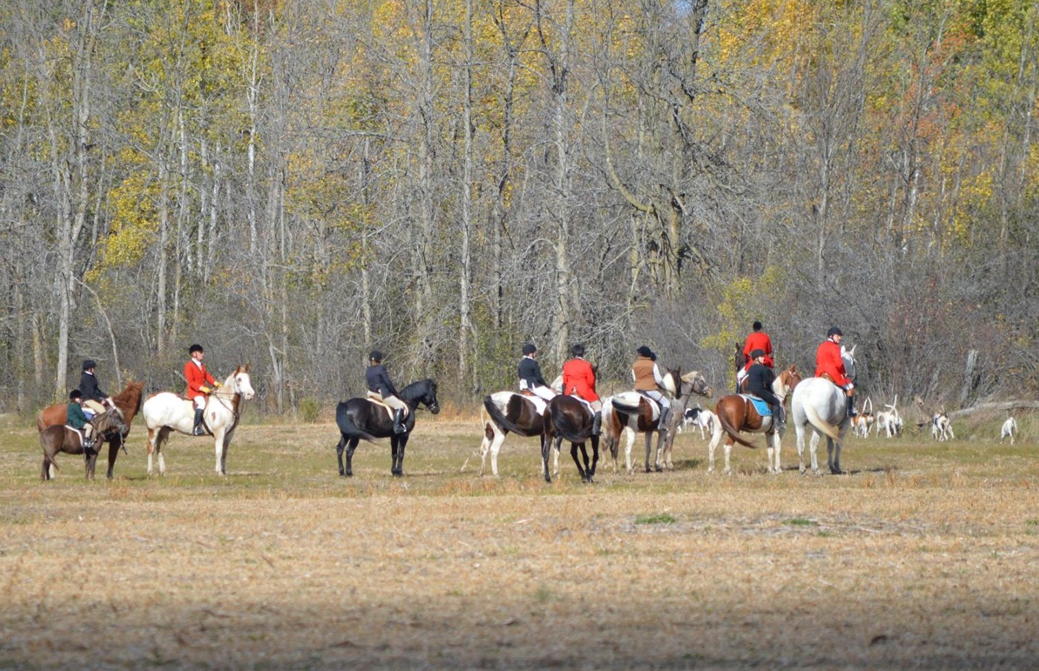 ottawa valley hunt riding horses in fall